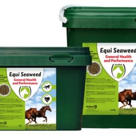 Hofman Equi Seaweed pellets (Zeewier)